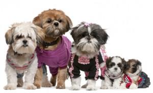 Shih Tzu Hunde mit Welpen