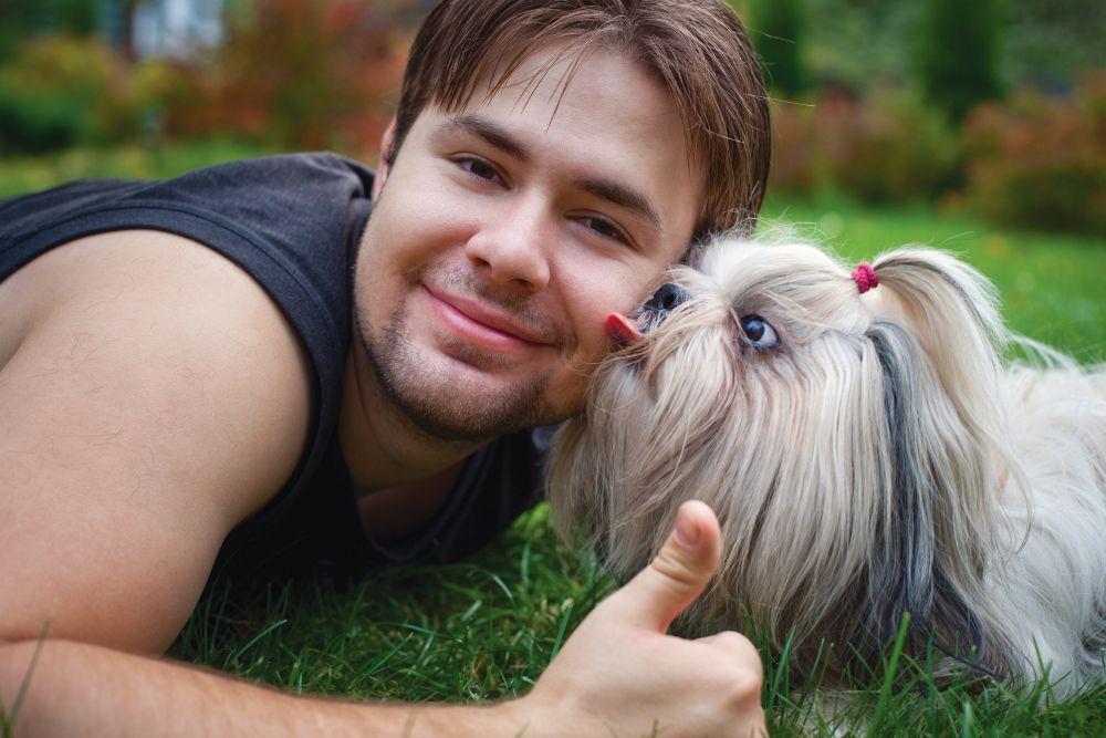 Shih Tzu als Therapiehund