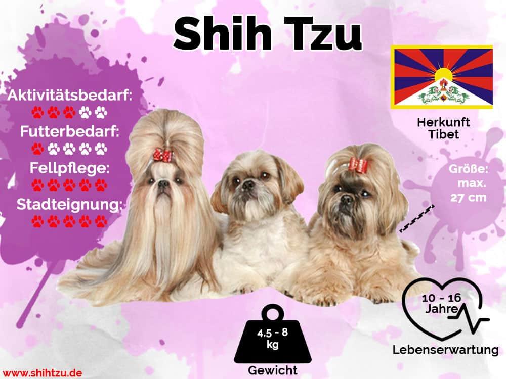 Shih Tzu Infografik