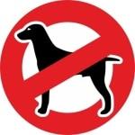 Hundeallergie Shih Tzu