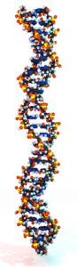 DNA-Analyse Shih-Tzu