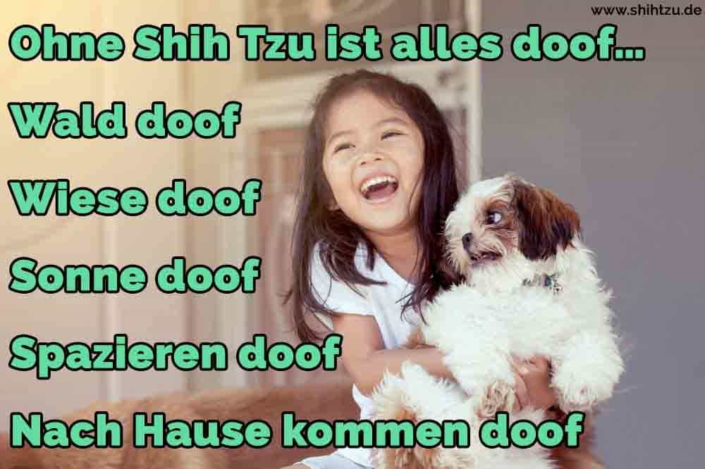 Ein Mädchen lachend mit ihrem Shih Tzu