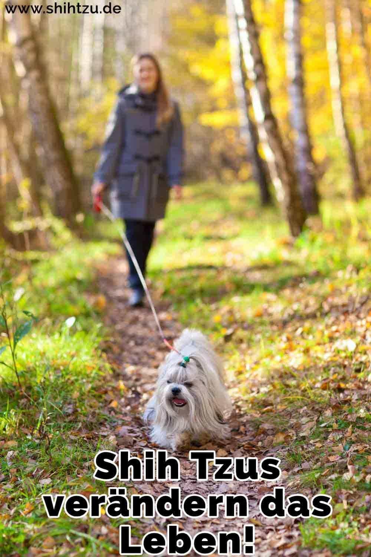 Eine Frau geht ihren Shih Tzu in den Wald