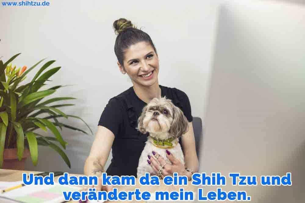 Eine Frau arbeitet mit ihrem Shih Tzu