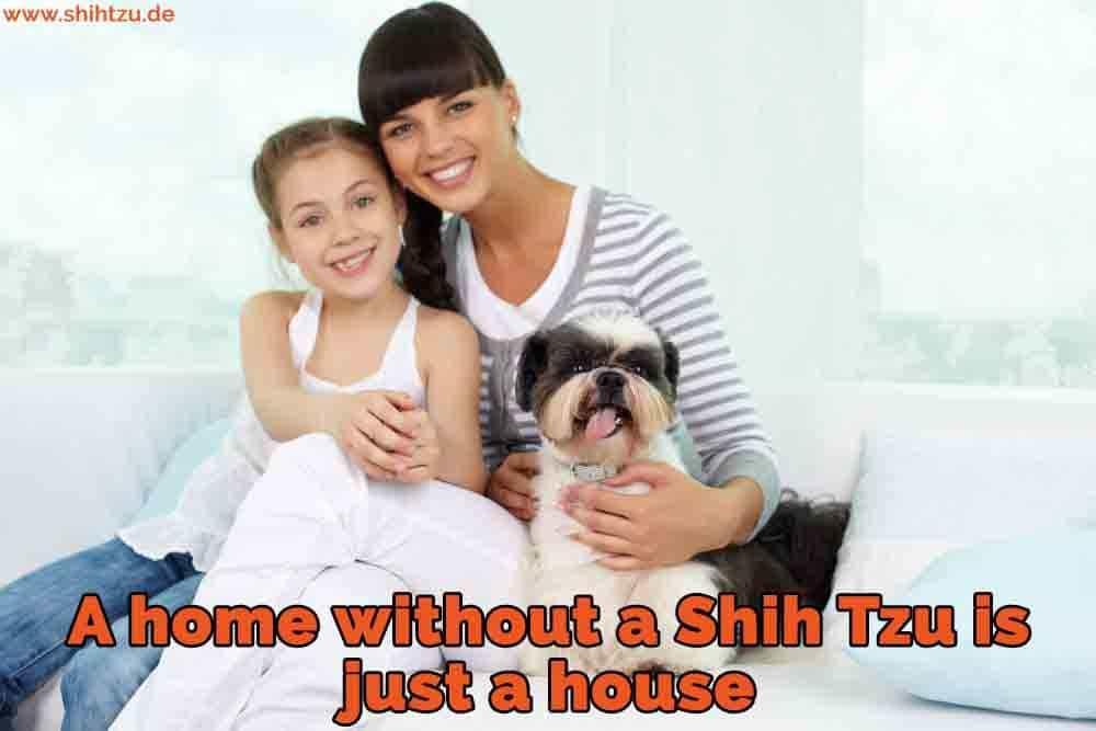 Eine Familie und Ihre Shih Tzu auf dem Sofa
