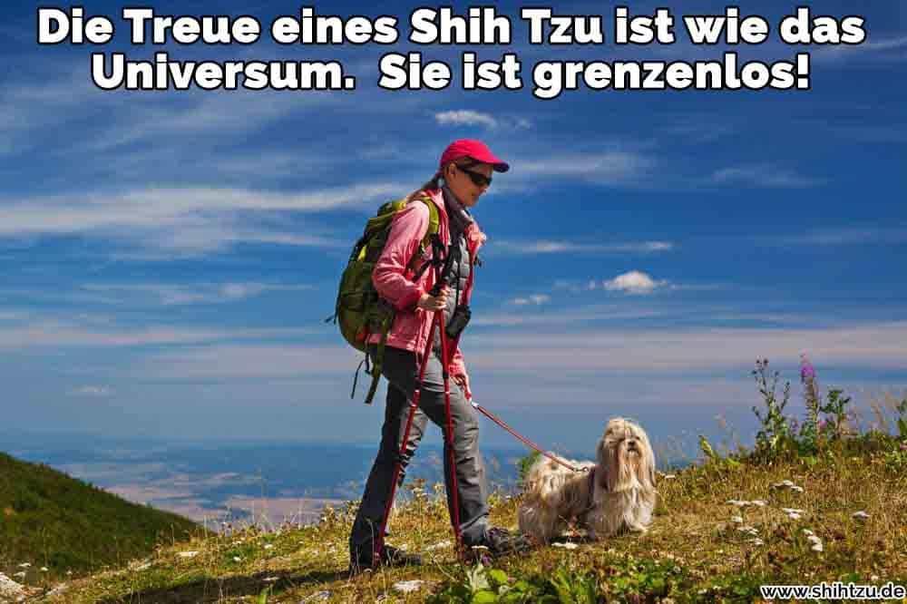 Eine Frau reist mit ihrem Shih Tzu
