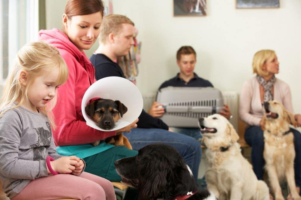 Wann ist es besser, den Shih Tzu zum Tierarzt zu bringen?