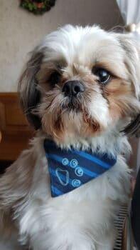 Hallo ihr lieben Hundedamen, ich der Sammy hätte gern ein Date mit euch.